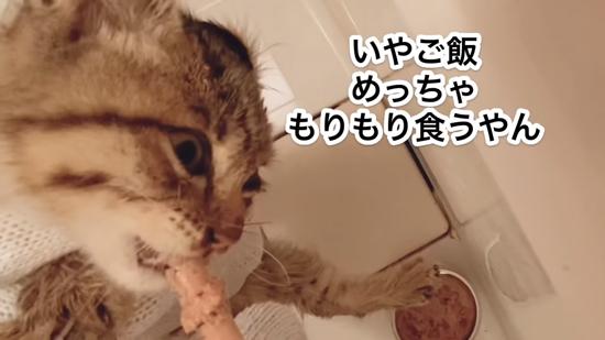 もりもり食べるネココさん