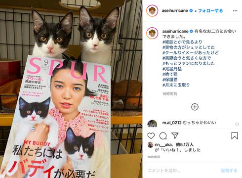 ミキ 亜生 猫 保護猫 SPUR