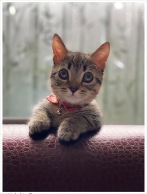 藤原紀香 猫 ペットロス マーシャ まー之助 ブログ 子猫 片岡愛之助