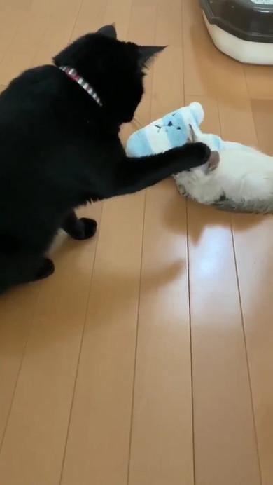 黒猫のミナさん