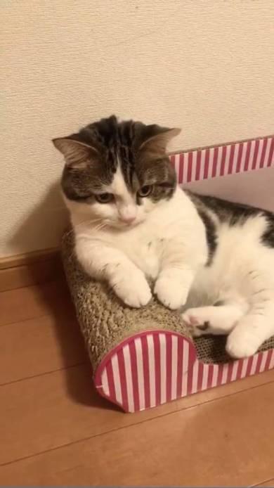 猫 ライちゃん