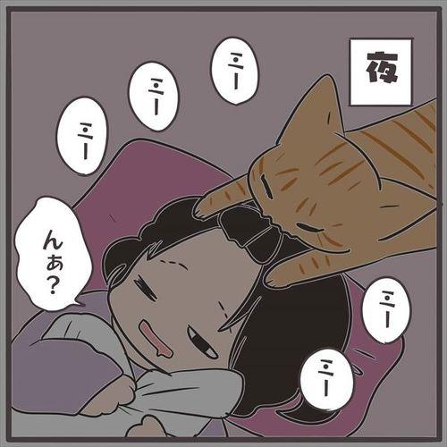 猫の不思議な習性