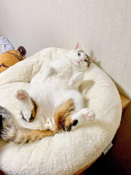 猫ちゃんの盗撮画像