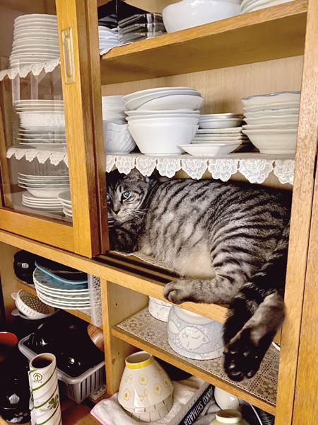 食器棚の右から