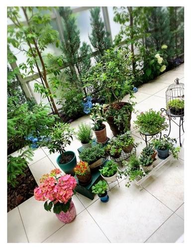 小川菜摘 種 中国 植えた 植物防疫所