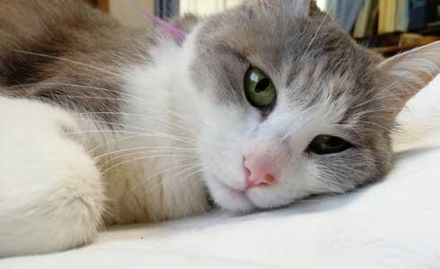 猫 親子 娘にかまってもらいたい 母猫 甘えん坊