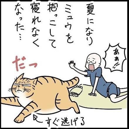 猫のやさしさ1