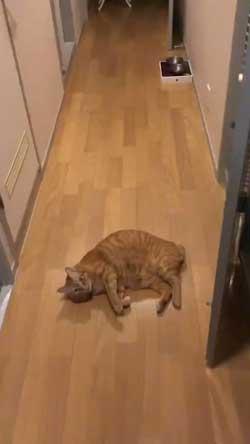 ナデナデ猫