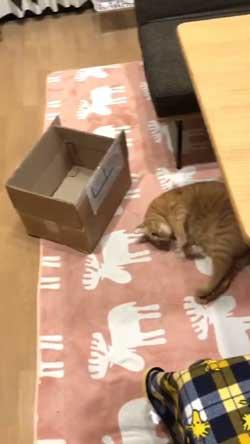 猫 ナデナデして なでてほしい ゴロン かわいい