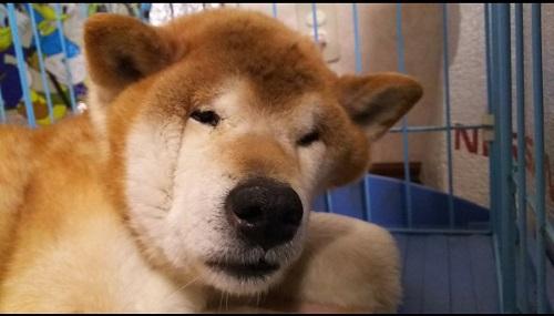 犬 寝起き