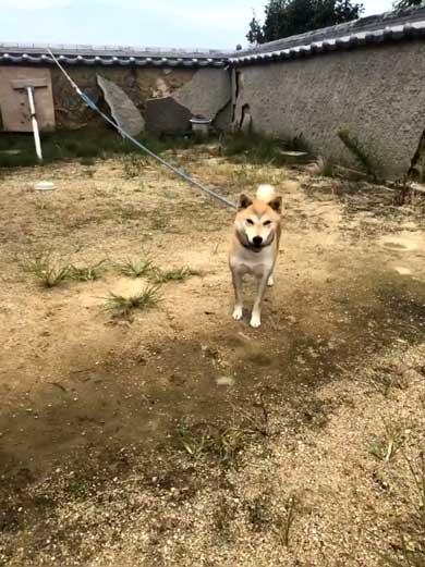 犬 合成画像感 3D CG ゲーム AR 庭