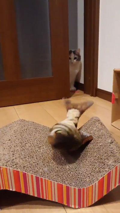 ドン引き猫ちゃん1