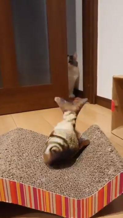 ドン引き猫ちゃん2
