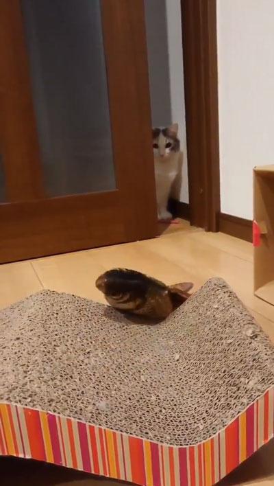 ドン引き猫ちゃん3