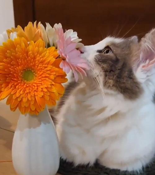 お花とチャコさん