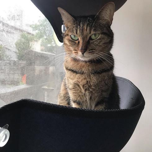 ハゲの原因猫ちゃん