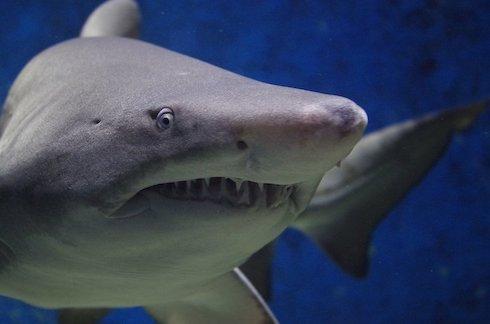 絶妙に海に行きたくなくなる?マジメに面白いサメ映画ベスト10