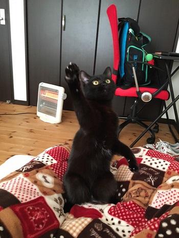 ハンガーにしか見えない 黒 猫 ファー