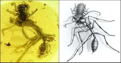 9900万年前古代アリが捕食する瞬間を記録した琥珀を発見 「捕食の瞬間が保存されているのは非常にまれなこと」
