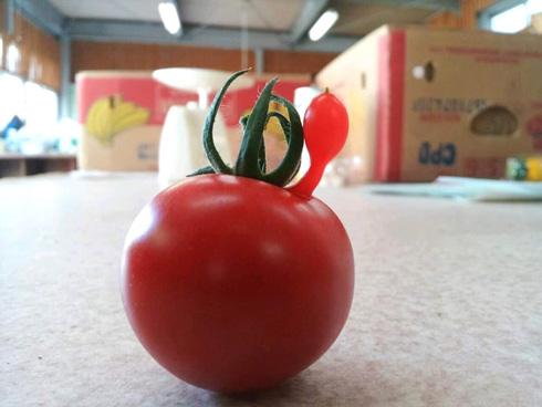 風船がはえた形のトマト