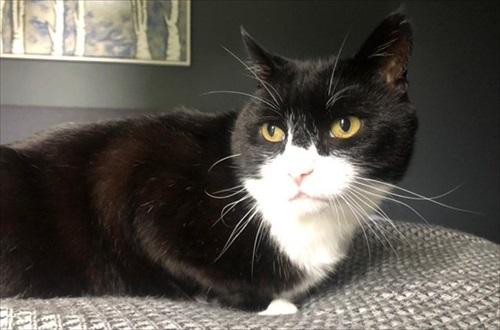 イギリス外務省の猫・パーマストン引退