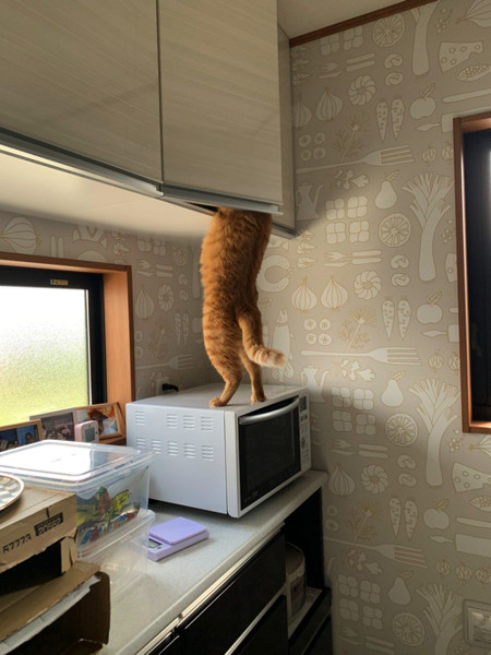 おやつ泥棒をする猫ちゃん