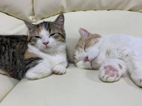 猫 りんの成長日記 りんちゃん もちくん