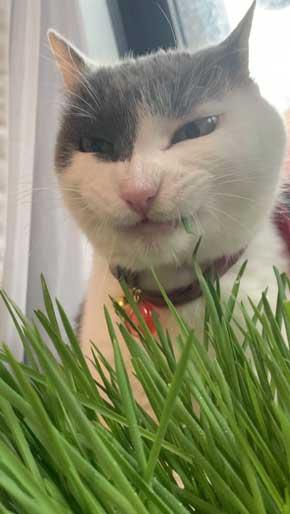 猫 食事 動画 コマ送り テンション上がる 表情 顔