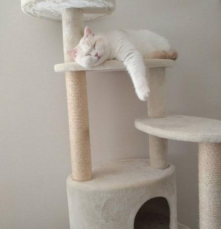 キャットタワーで眠る福ちゃん