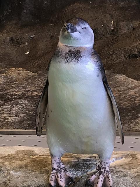 扇風機の風を独り占めするペンギンさん