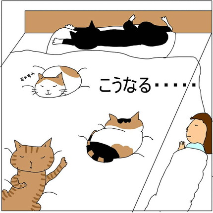 ネコちゃんが眠っているから