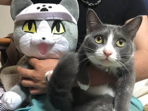 現場猫 ツーショット かわいいからヨシ!