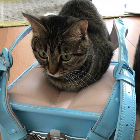 圧がすごい 猫 ホッケ 表情 食べたそう