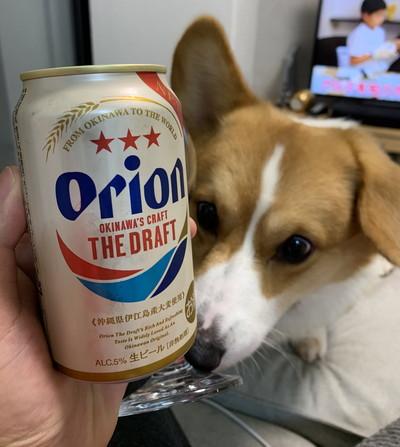 オリオンビールとともに