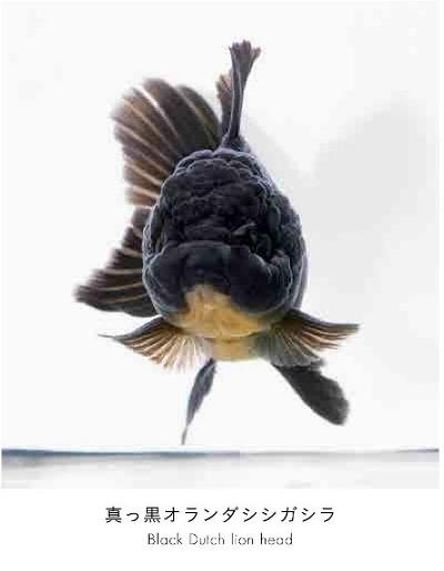 世界初の魚の顔図鑑 うおづら