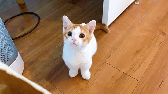 子猫のびっくりした表情