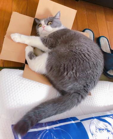箱とひのでくん