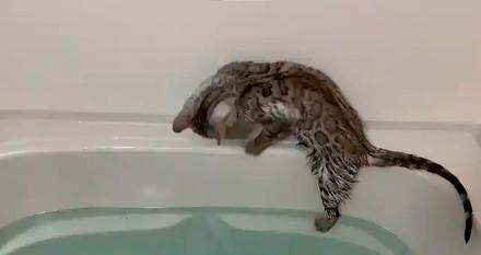 お風呂ねこ