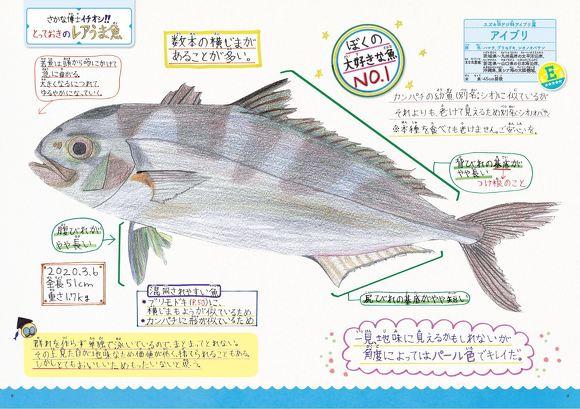 レアうま魚図鑑