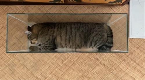 きれいに収まる猫ちゃん