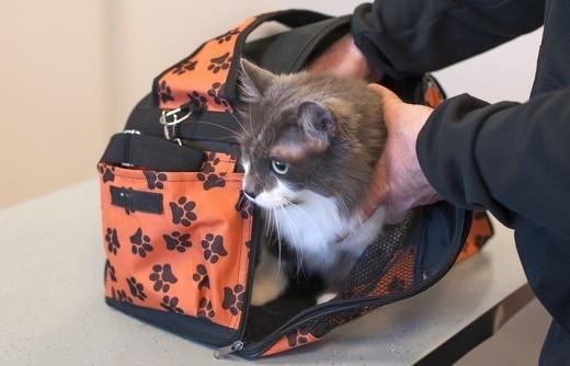 ペット手帳 猫防災