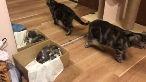 こまちさん おかゆちゃん 猫
