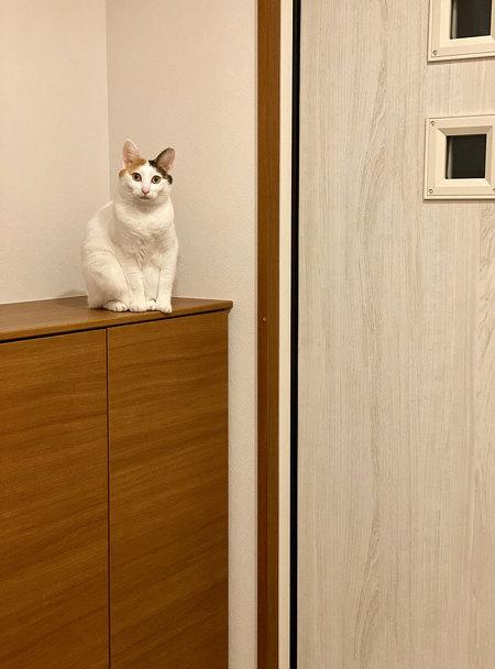 リアル招き猫カンナさん