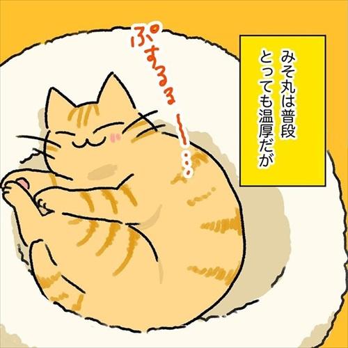 猫ちゃんの野生を引き出す方法