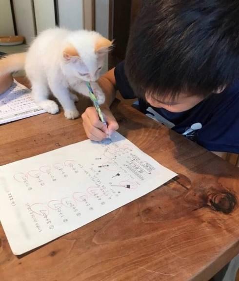 ういろう いなり 猫 お絵描き