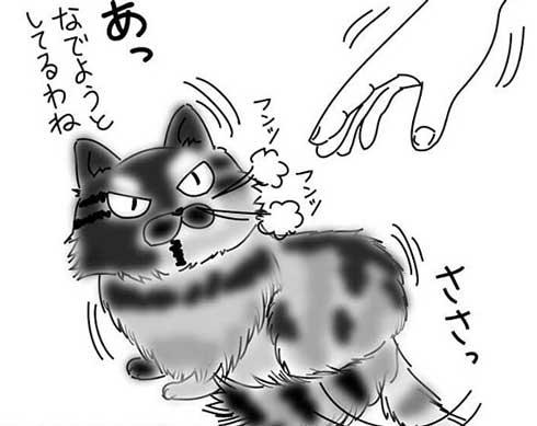 豹変する猫