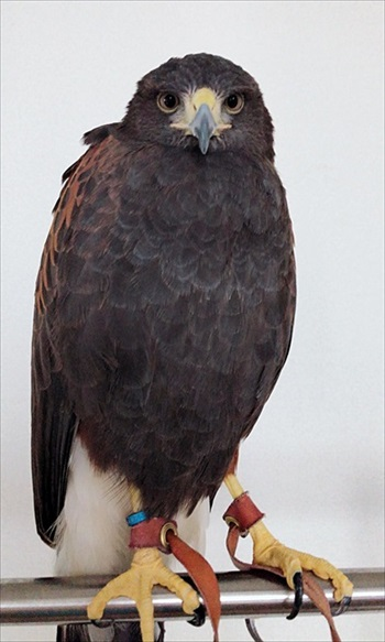 ホームセキュリティの鷹さん