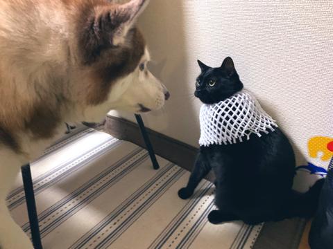 バステト神のような猫ちゃん