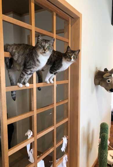 猫 箱 入れない箱なんてないんですよ 入る プロ ココニャ