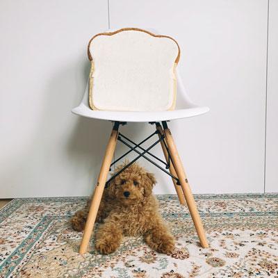 椅子の下稲穂くん